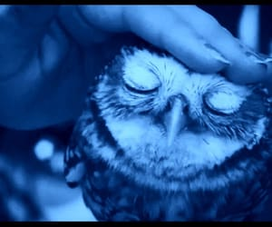 owls and blue glow image