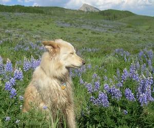 animals, green, and dog image