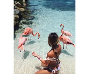 goal, flamant rose, and somptueuse._ image