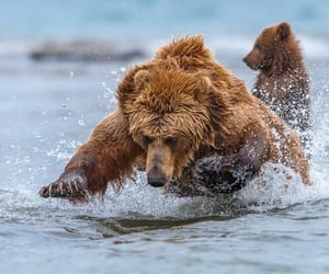 animals, photography, and bear image