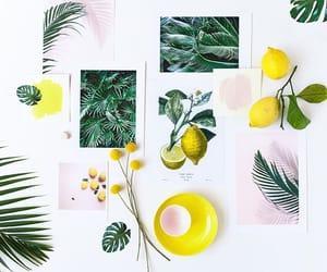citrus, inspiration, and palette image