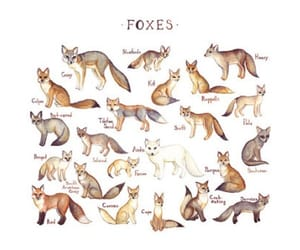 art, beige, and foxes image