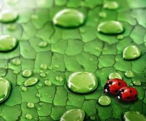 green, nice, and grün image