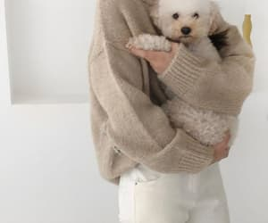 aesthetic, beige, and dog image