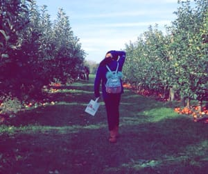 apples, october, and orchard image