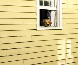 dog, yellow, and house image