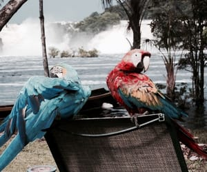 bird and parrot image