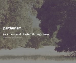 sound, trees, and wind image