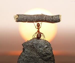 ant and sun image