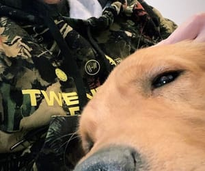 dog, josh dun, and jim dun image