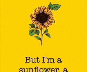 sunflower, wallpaper, and yellow image