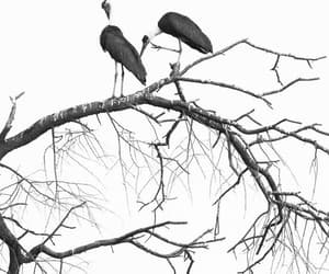 artistic, birds, and black and white image