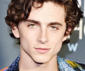 timmy, critics choice awards, and timothee chalamet image