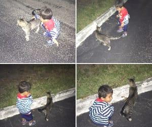 cat, gato, and florida image