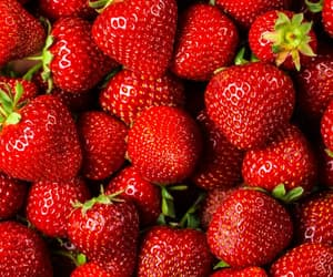 animal, fraise, and strawberry image