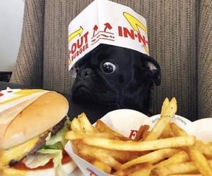 dog, food, and pet image