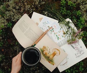 aesthetic, books, and forest image