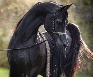 horse, arabian, and black image
