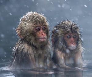 animal, monkey, and nature image
