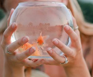 fish, goldfish, and animal image