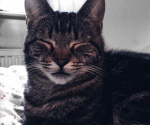 animal, sleep, and cute image