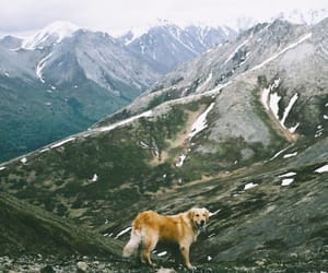 beauty, labrador, and landscapes image