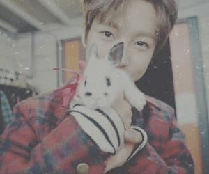 aesthetic, cute, and bunny image