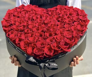 beautiful, redrose, and gift image