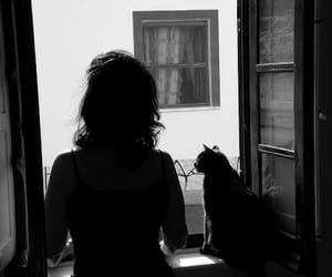 animal, cat, and girl image