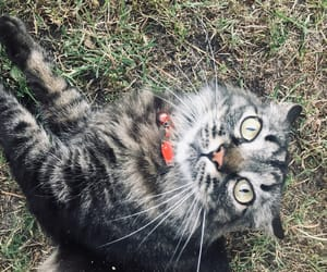 animal, gato, and ojos  image