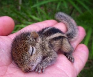adorable, squirrel, and baby animal image