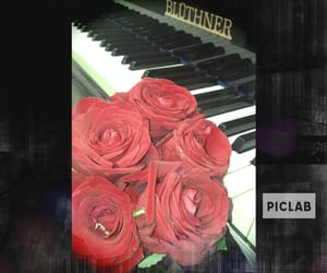blumen, piano, and rosen image