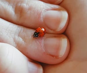bug, lady bug, and red image