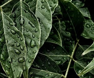 nature, plants, and rain image
