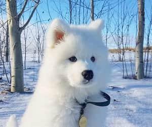 cut, dog, and cute image