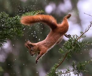 animals, squirrels, and trees image