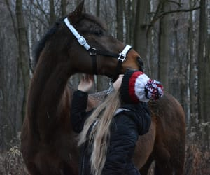 equestrian, winter, and equine image