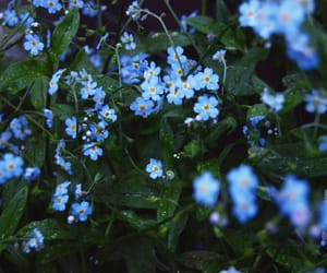 blue, cold, and flowes image