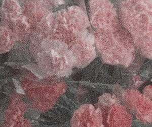 aesthetic, rose, and cute image