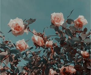 aesthetic; flower