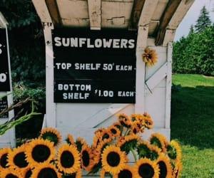 bouquet, florist, and flowers image