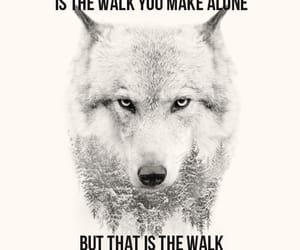 frasi, quotes, and wolf image