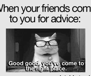 advice, cat, and cats image