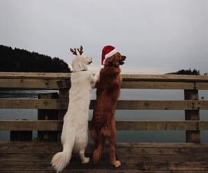brown, dog, and doggy image