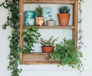 plants, book, and decorating image