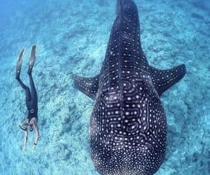 beach, shark, and blue image