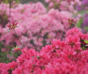 flowers, pink, and nature image
