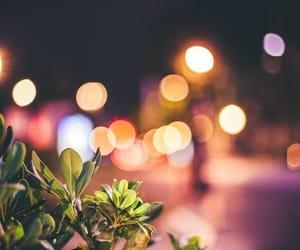 plants, lights, and night image