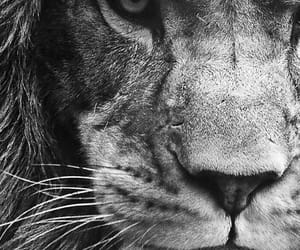 inspiration and lion image