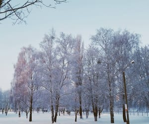 belarus, trees, and europe image